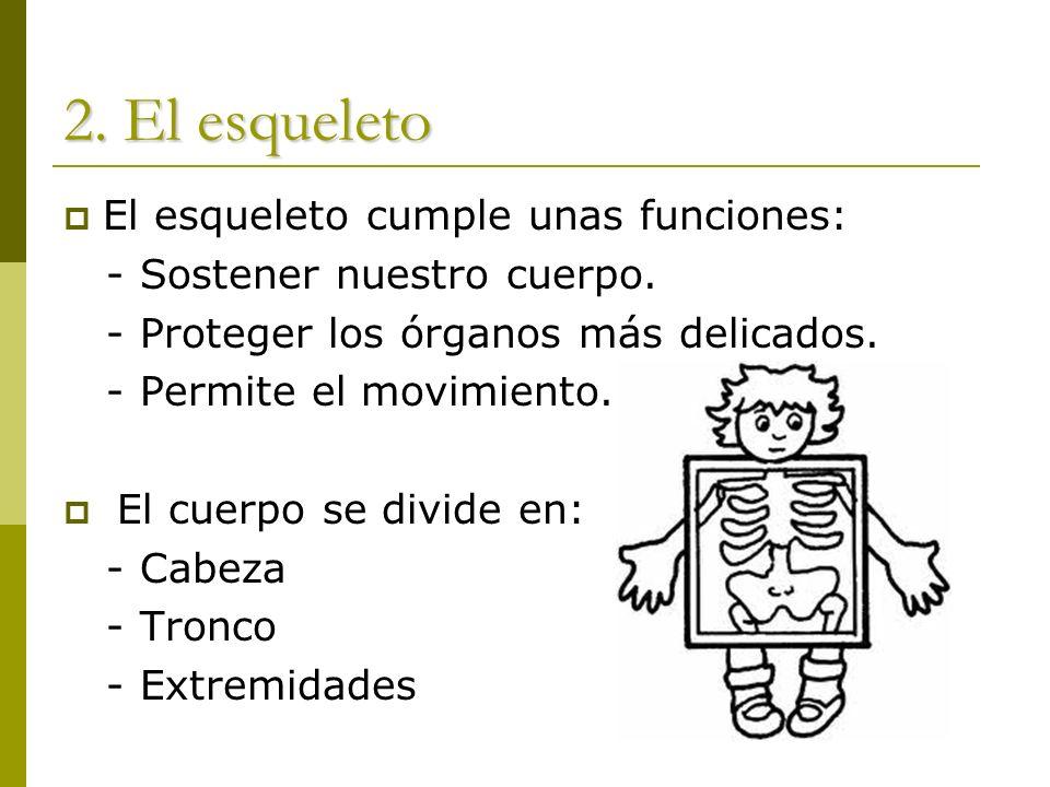 2. El esqueleto El esqueleto cumple unas funciones:
