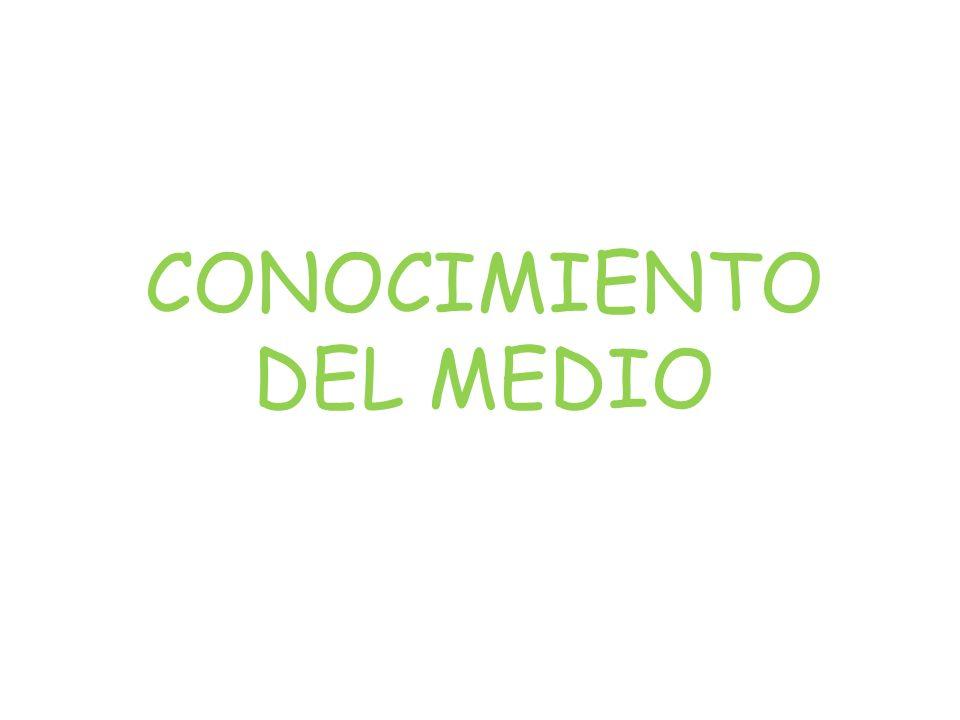 CONOCIMIENTO DEL MEDIO