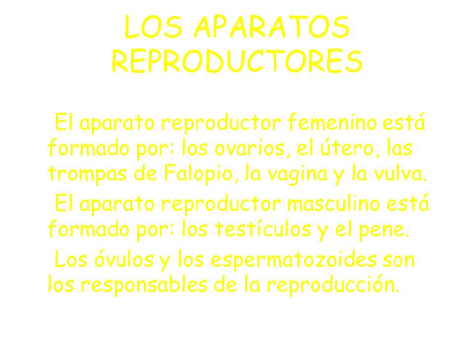 LOS APARATOS REPRODUCTORES