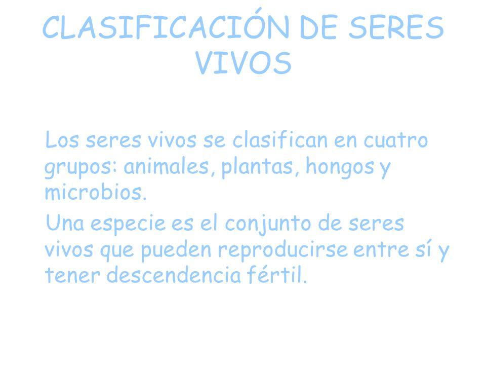 CLASIFICACIÓN DE SERES VIVOS