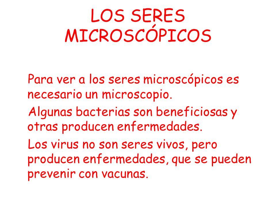 LOS SERES MICROSCÓPICOS
