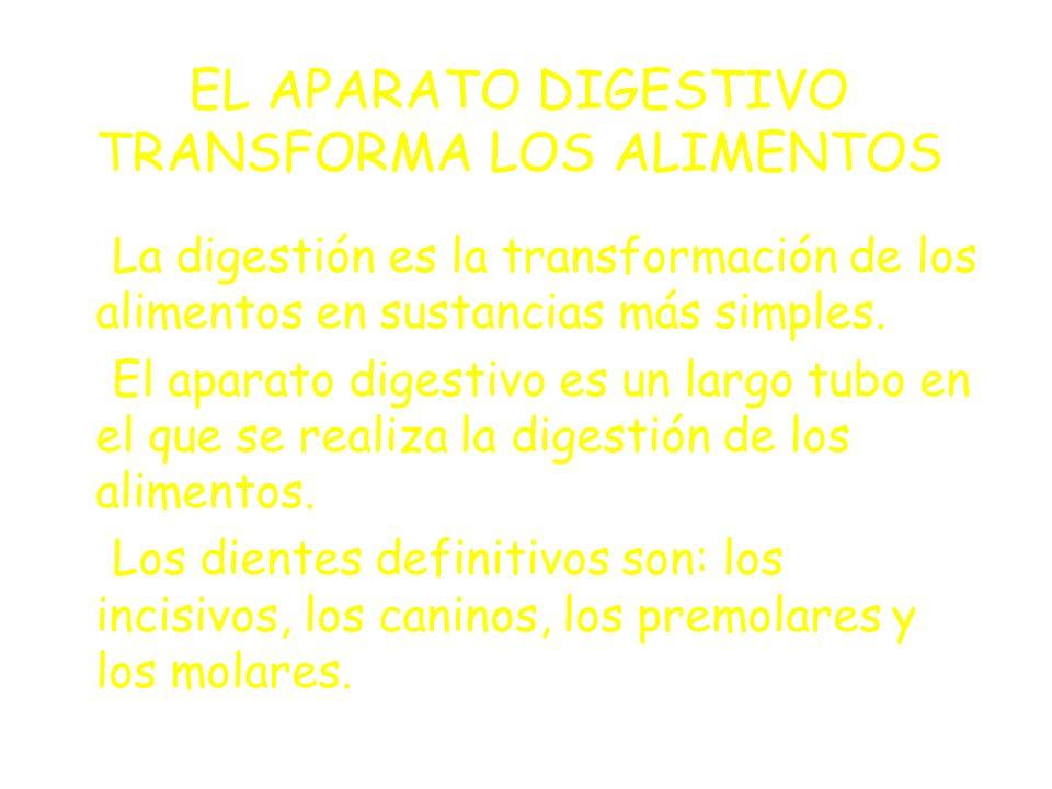 EL APARATO DIGESTIVO TRANSFORMA LOS ALIMENTOS