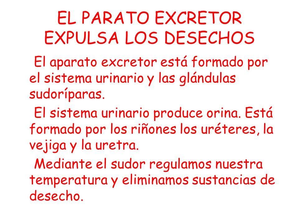 EL PARATO EXCRETOR EXPULSA LOS DESECHOS
