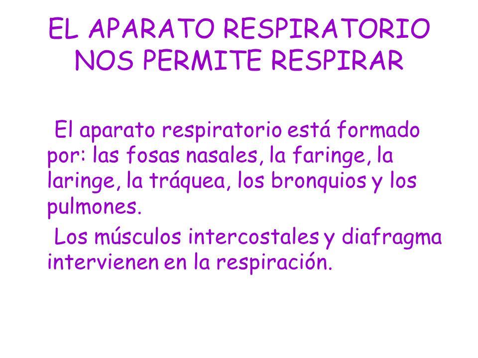 EL APARATO RESPIRATORIO NOS PERMITE RESPIRAR