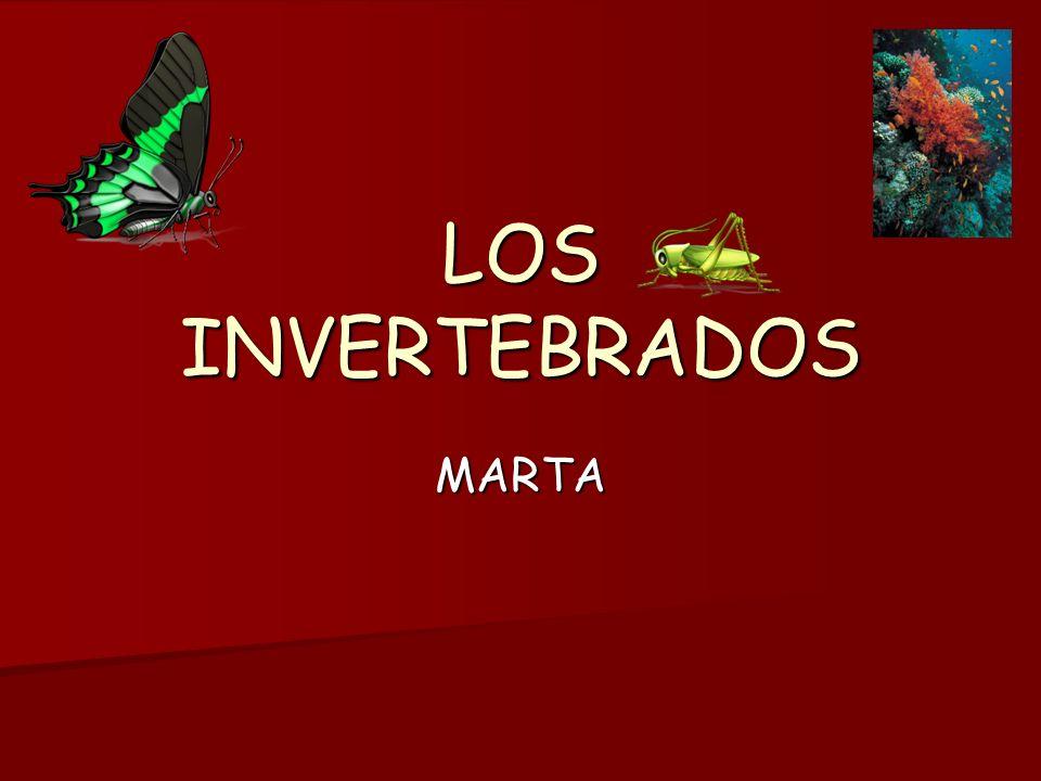 LOS INVERTEBRADOS MARTA