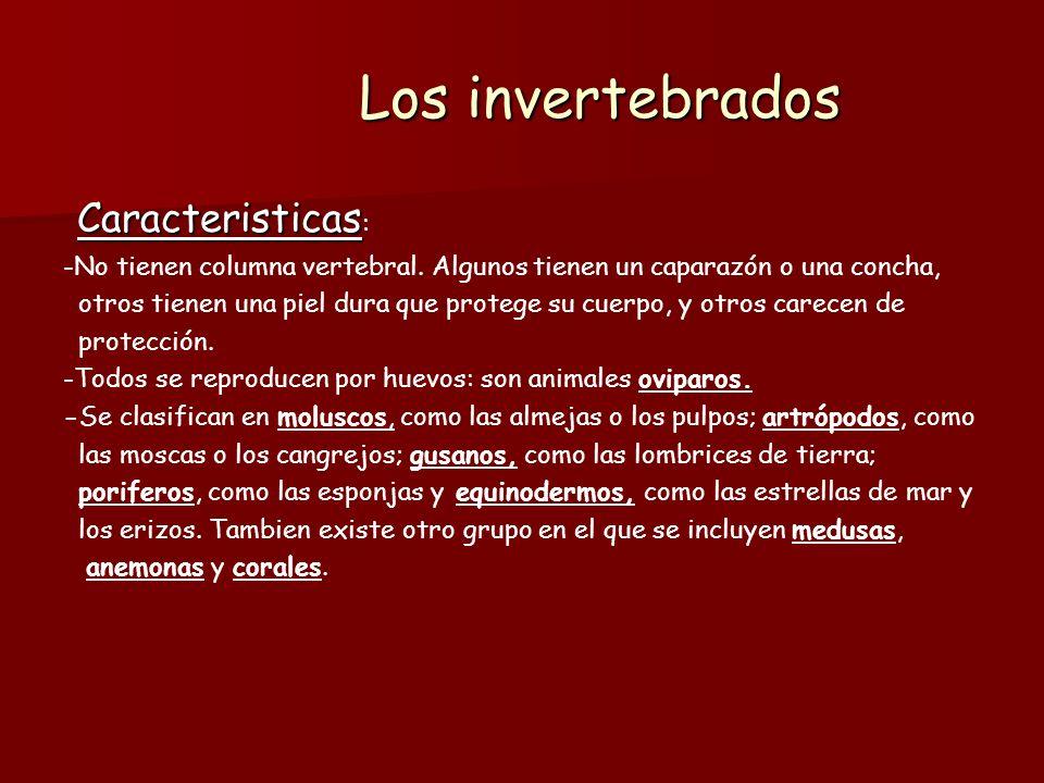 Los invertebrados Caracteristicas: