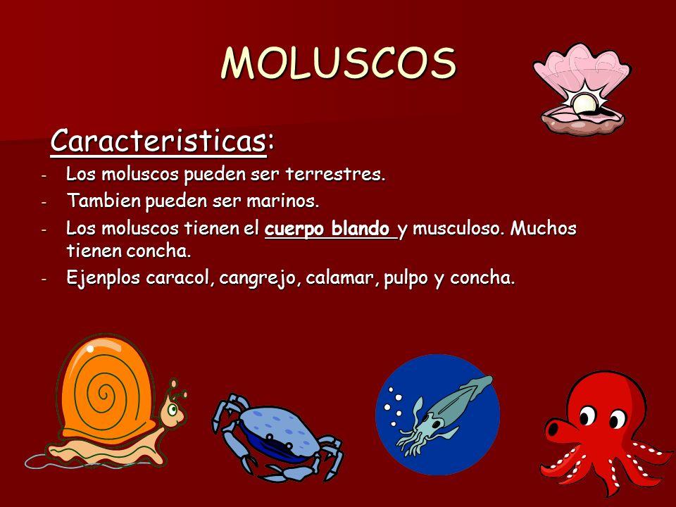 MOLUSCOS Caracteristicas: Los moluscos pueden ser terrestres.