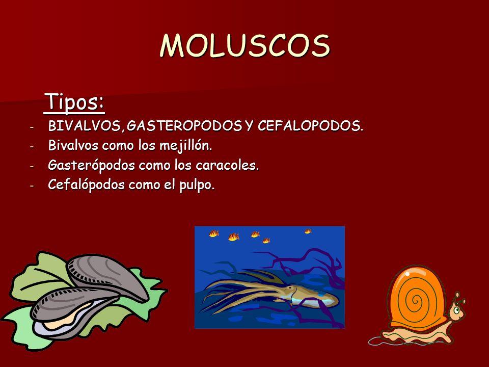MOLUSCOS Tipos: BIVALVOS, GASTEROPODOS Y CEFALOPODOS.