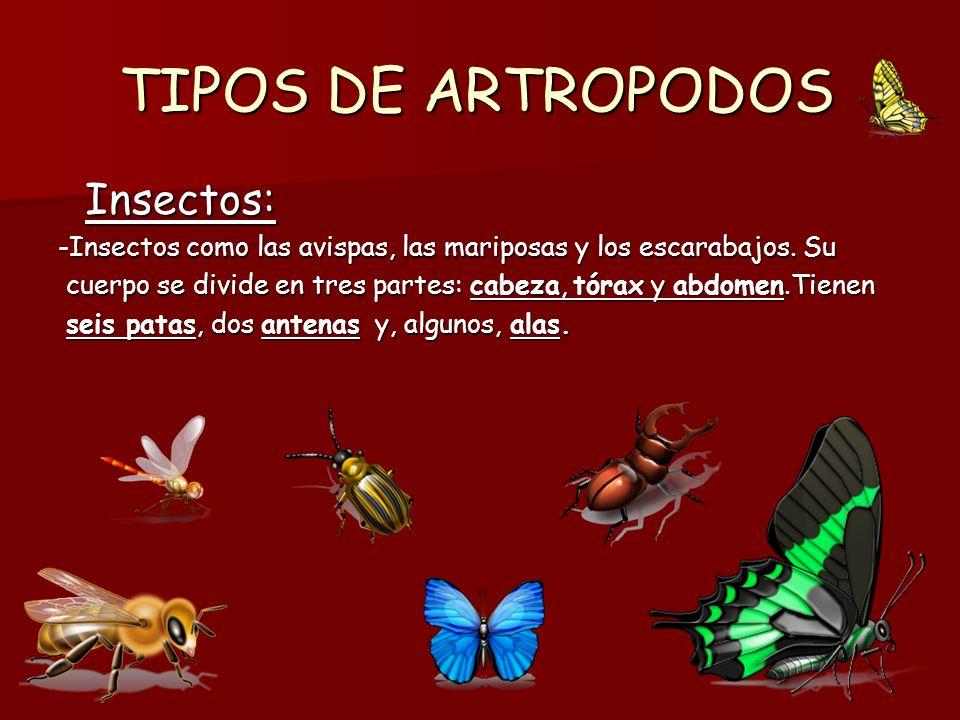 TIPOS DE ARTROPODOS Insectos: