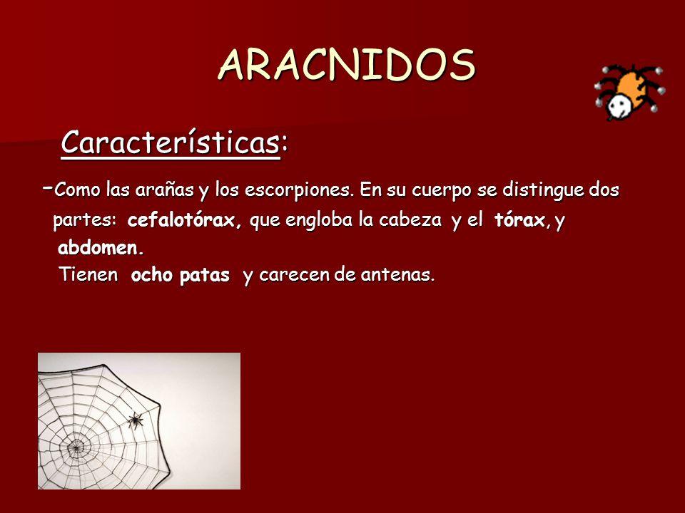 ARACNIDOS Características: