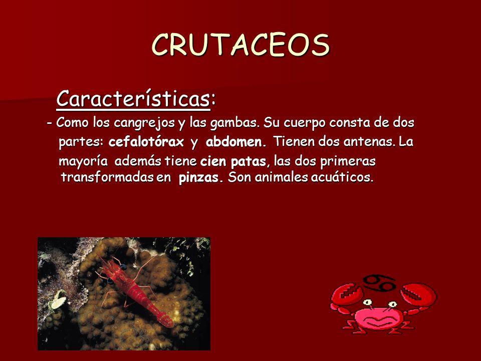CRUTACEOS Características: