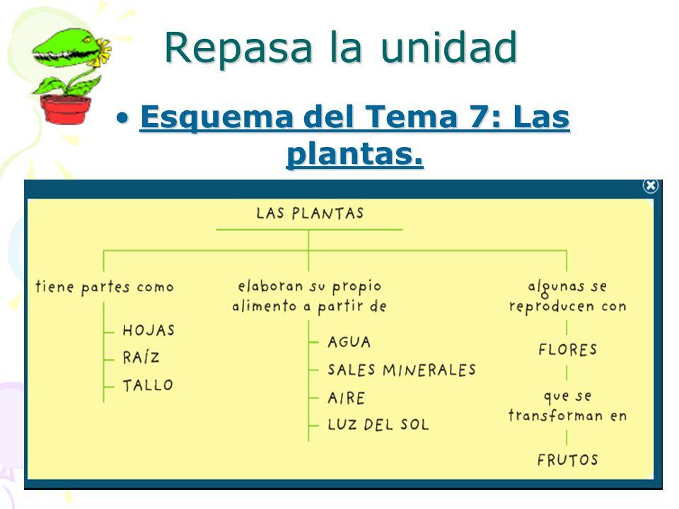 Esquema del Tema 7: Las plantas.