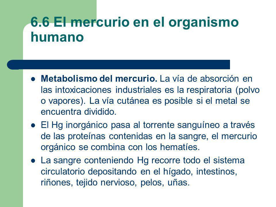 6.6 El mercurio en el organismo humano