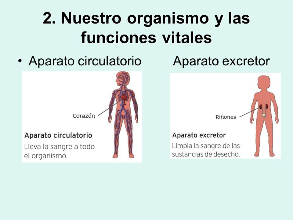2. Nuestro organismo y las funciones vitales