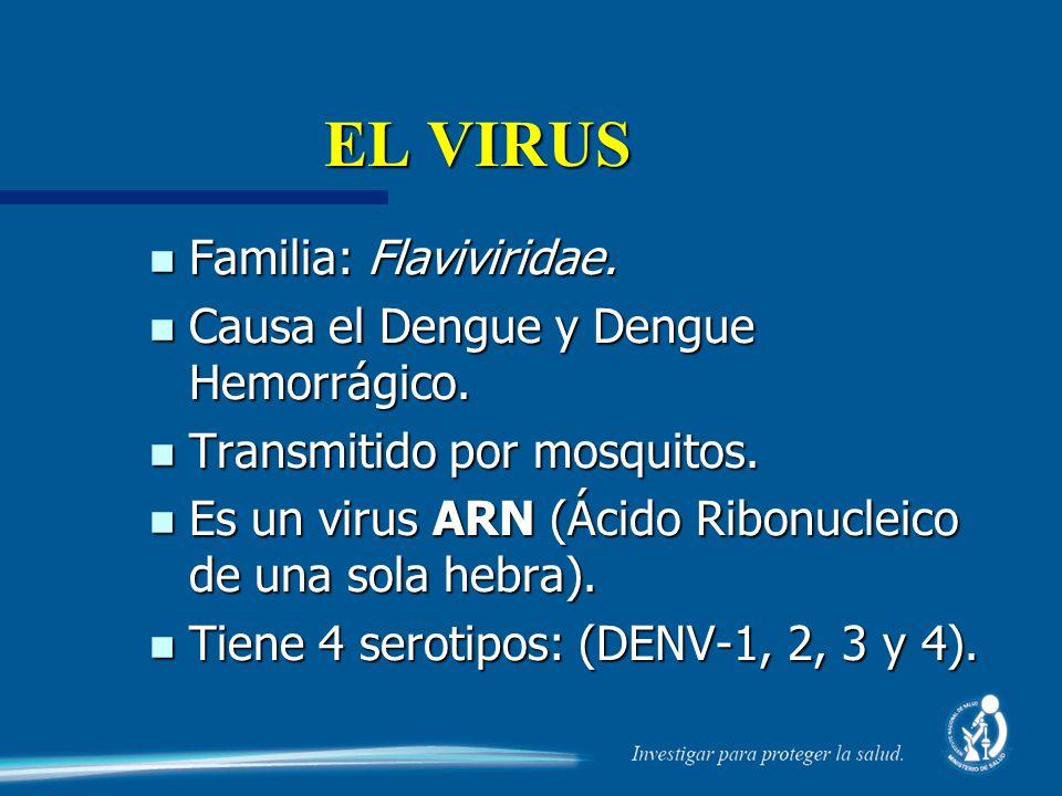 EL VIRUS Familia: Flaviviridae. Causa el Dengue y Dengue Hemorrágico.