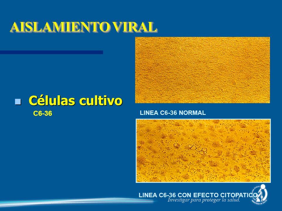 AISLAMIENTO VIRAL Células cultivo C6-36 LINEA C6-36 NORMAL