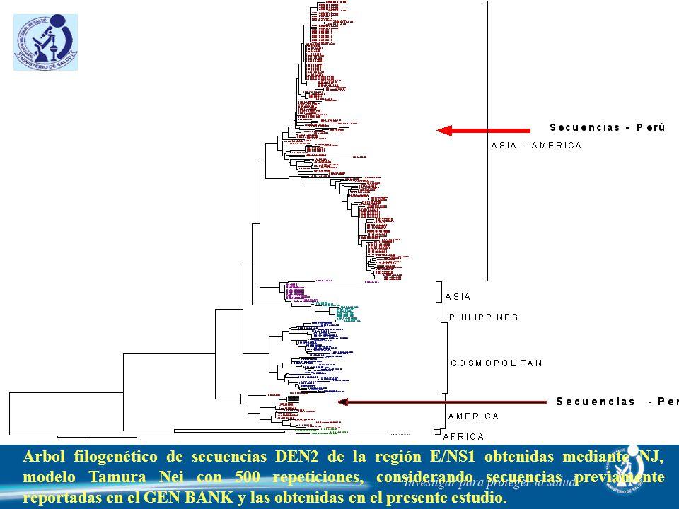 Arbol filogenético de secuencias DEN2 de la región E/NS1 obtenidas mediante NJ, modelo Tamura Nei con 500 repeticiones, considerando secuencias previamente reportadas en el GEN BANK y las obtenidas en el presente estudio.