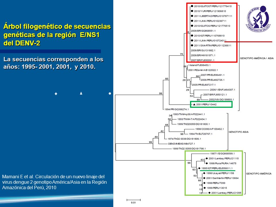 Árbol filogenético de secuencias genéticas de la región E/NS1