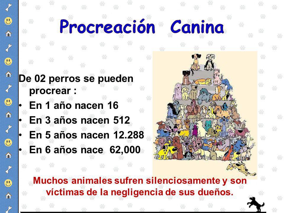 Procreación Canina De 02 perros se pueden procrear : En 1 año nacen 16