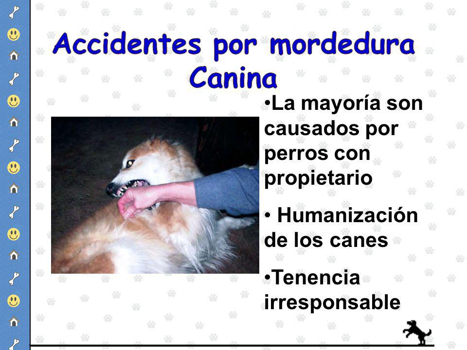 Accidentes por mordedura Canina