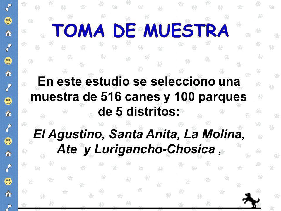 El Agustino, Santa Anita, La Molina, Ate y Lurigancho-Chosica ,