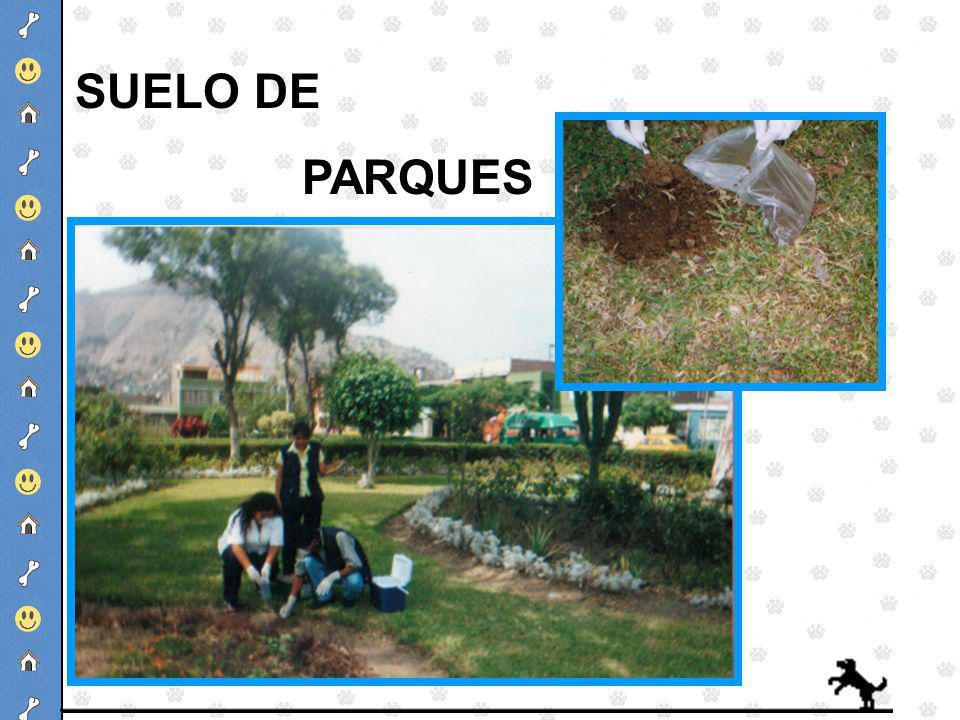 SUELO DE PARQUES