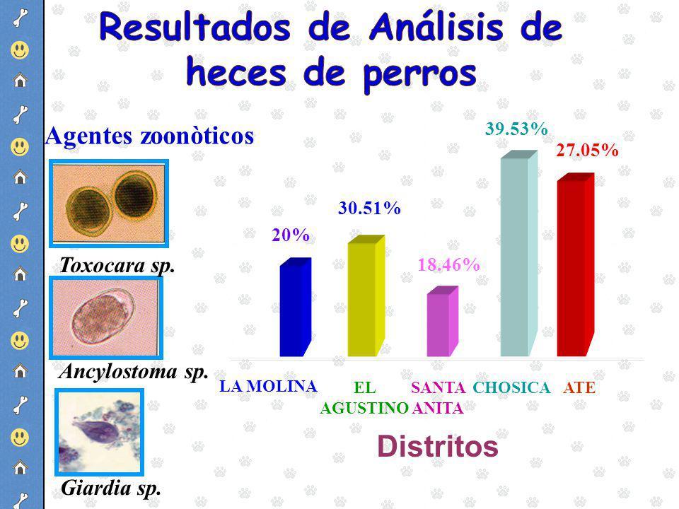 Resultados de Análisis de heces de perros