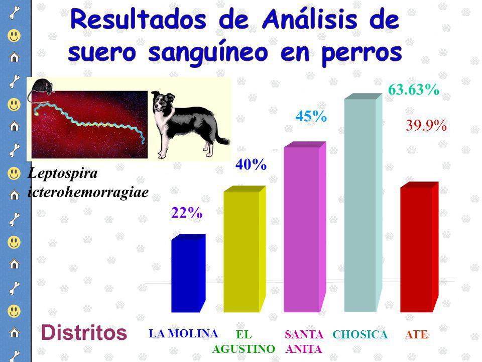 Resultados de Análisis de suero sanguíneo en perros