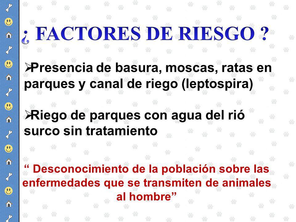 ¿ FACTORES DE RIESGO Presencia de basura, moscas, ratas en parques y canal de riego (leptospira)