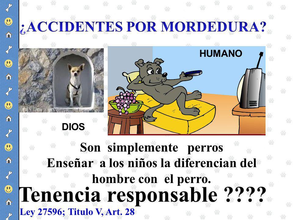 Tenencia responsable ¿ACCIDENTES POR MORDEDURA