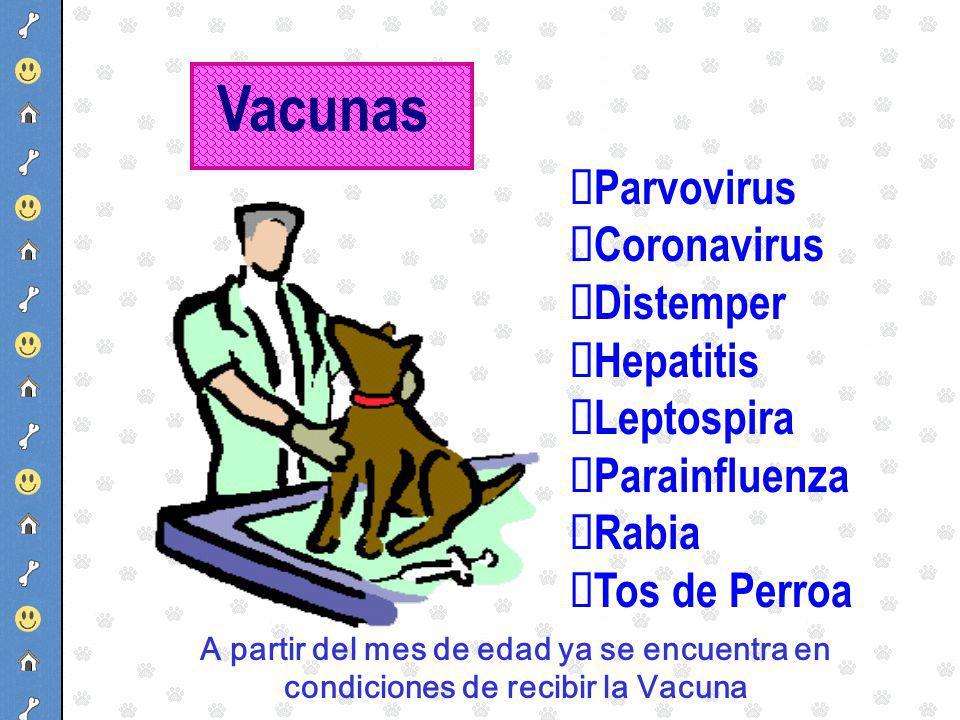 Vacunas ØParvovirus ØCoronavirus ØDistemper ØHepatitis ØLeptospira