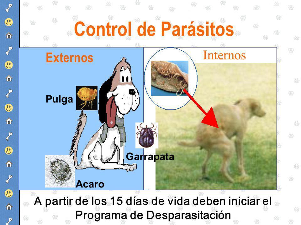 Control de Parásitos Internos Externos