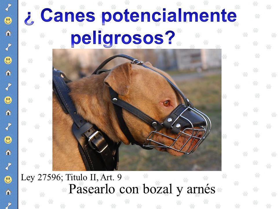 ¿ Canes potencialmente