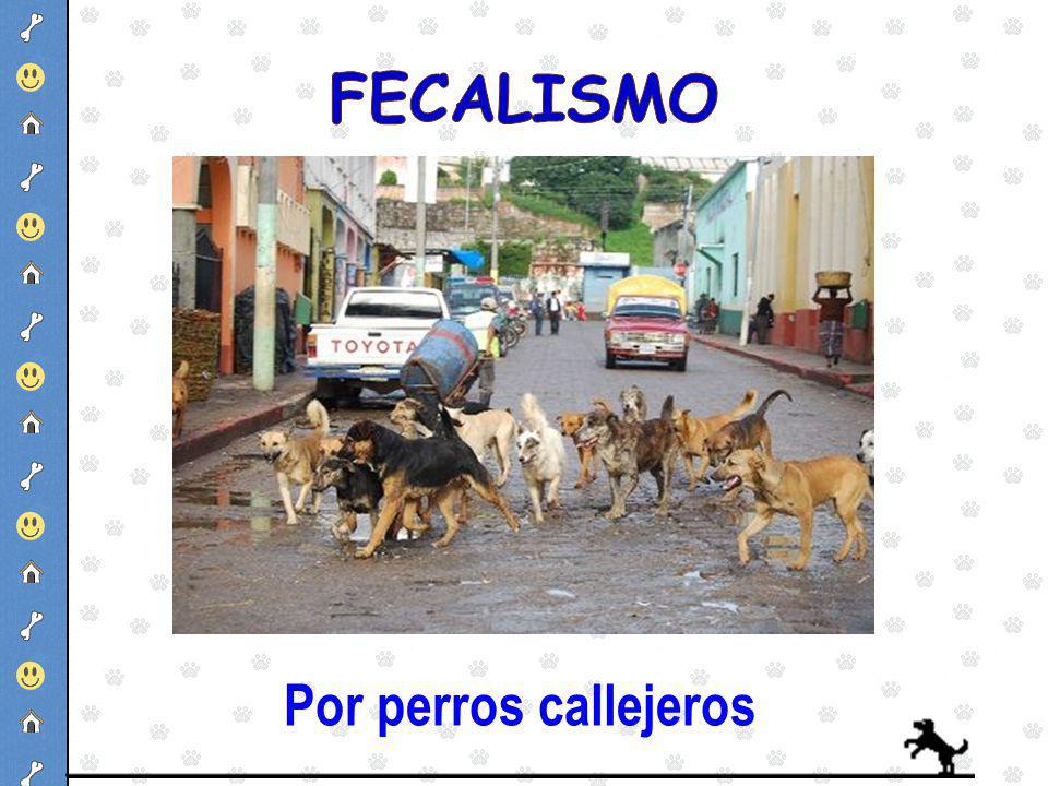 FECALISMO Por perros callejeros