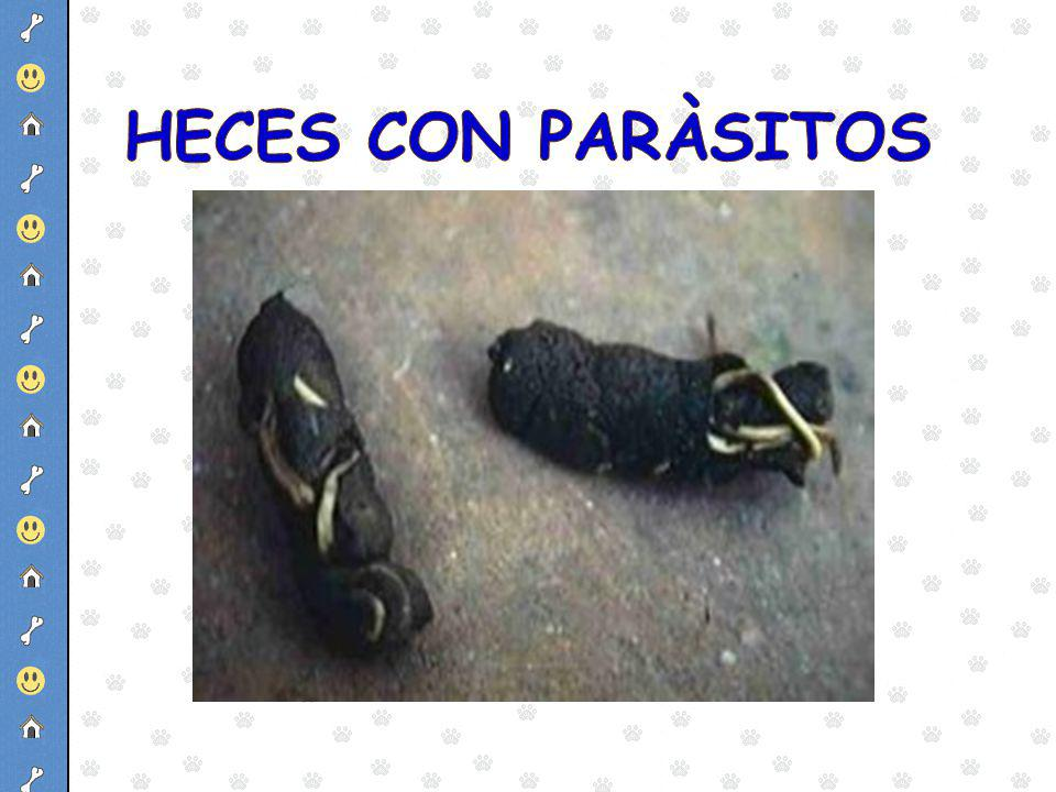 HECES CON PARÀSITOS