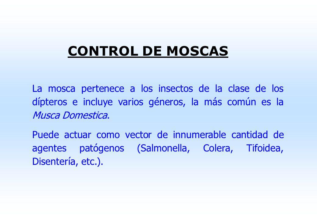 CONTROL DE MOSCAS La mosca pertenece a los insectos de la clase de los dípteros e incluye varios géneros, la más común es la Musca Domestica.