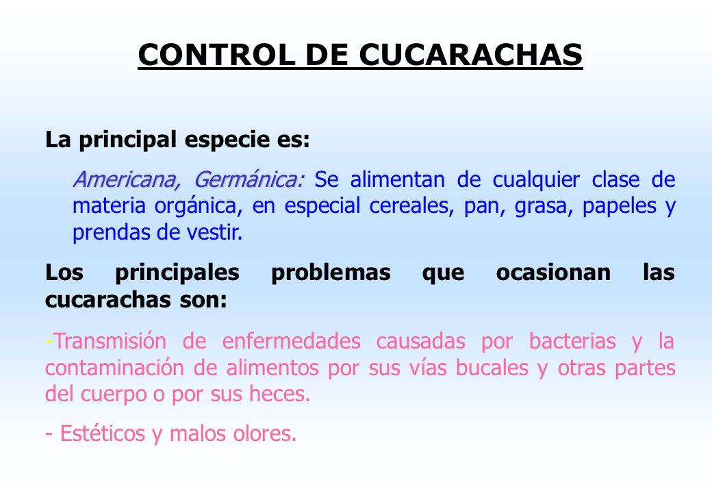 CONTROL DE CUCARACHAS La principal especie es: