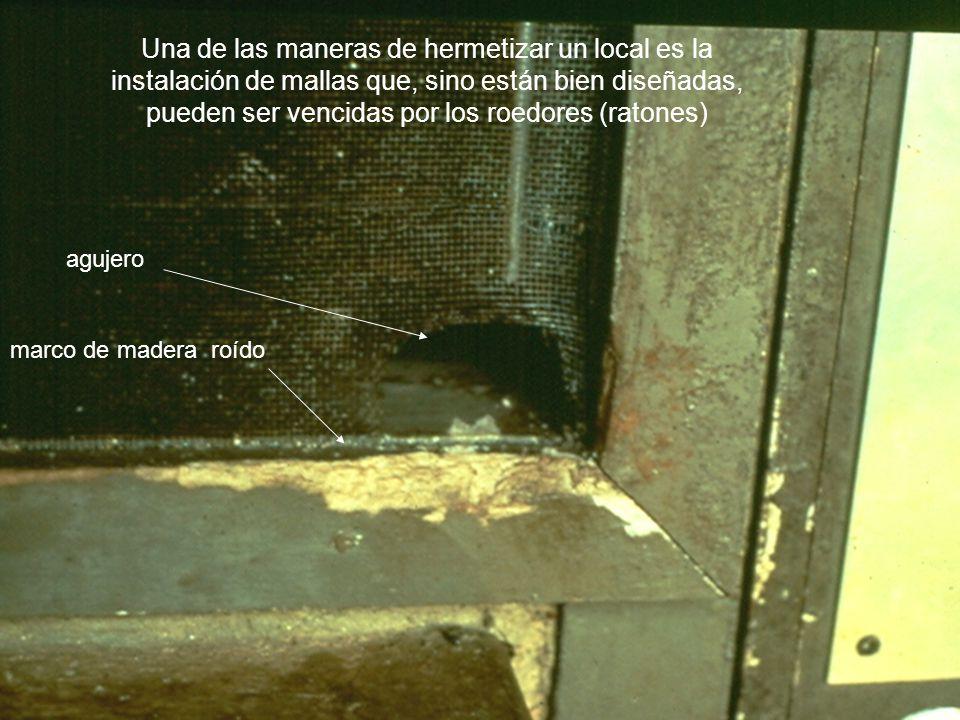 Una de las maneras de hermetizar un local es la instalación de mallas que, sino están bien diseñadas, pueden ser vencidas por los roedores (ratones)