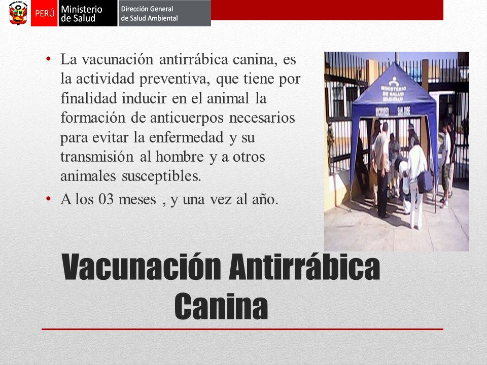 Vacunación Antirrábica Canina