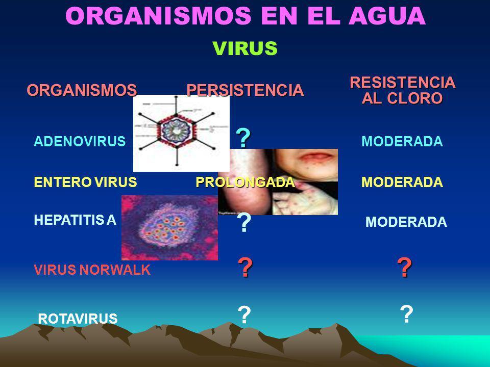 ORGANISMOS EN EL AGUA VIRUS ORGANISMOS PERSISTENCIA RESISTENCIA