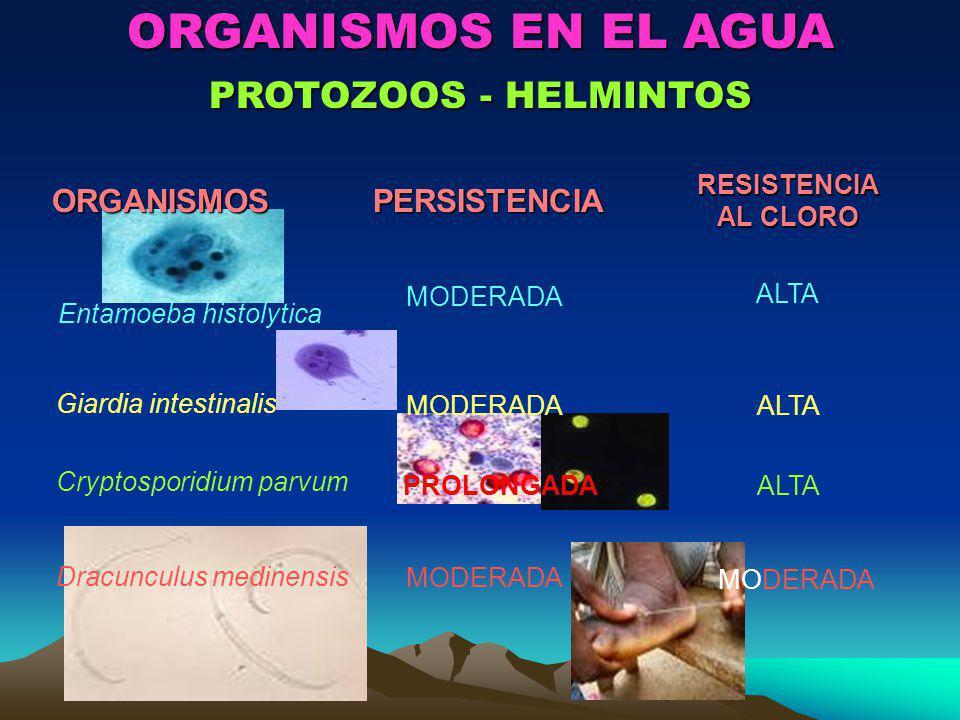 ORGANISMOS EN EL AGUA PROTOZOOS - HELMINTOS ORGANISMOS PERSISTENCIA