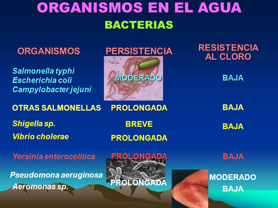 ORGANISMOS EN EL AGUA BACTERIAS ORGANISMOS PERSISTENCIA RESISTENCIA