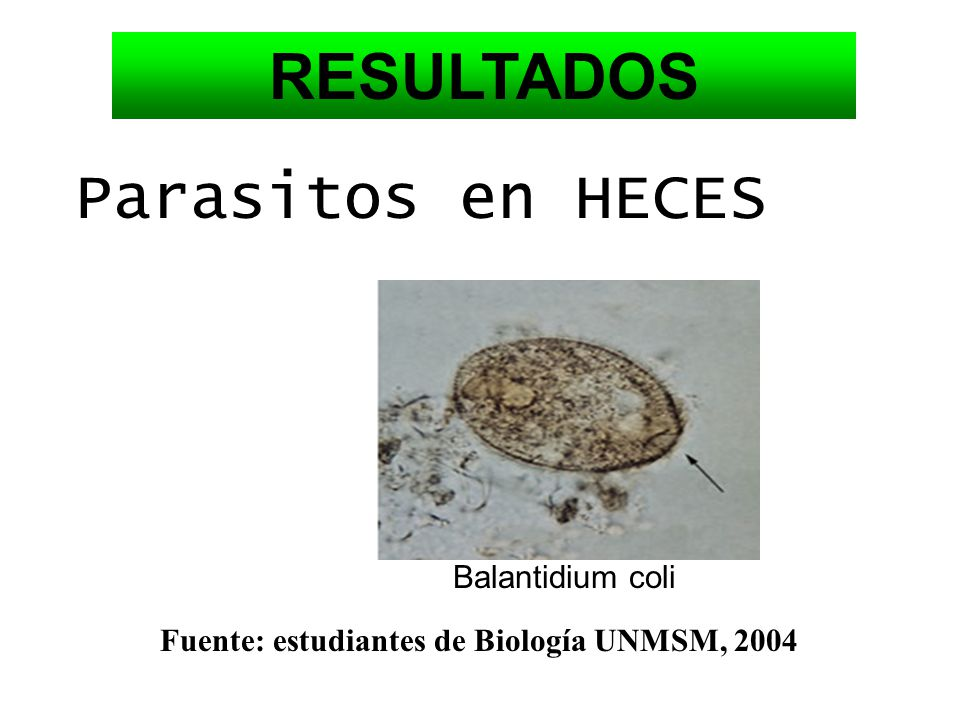 RESULTADOS Parasitos en HECES Balantidium coli