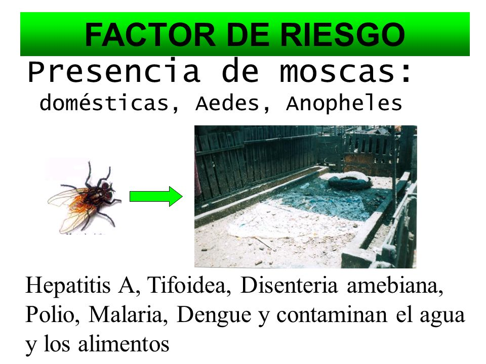 Presencia de moscas: domésticas, Aedes, Anopheles