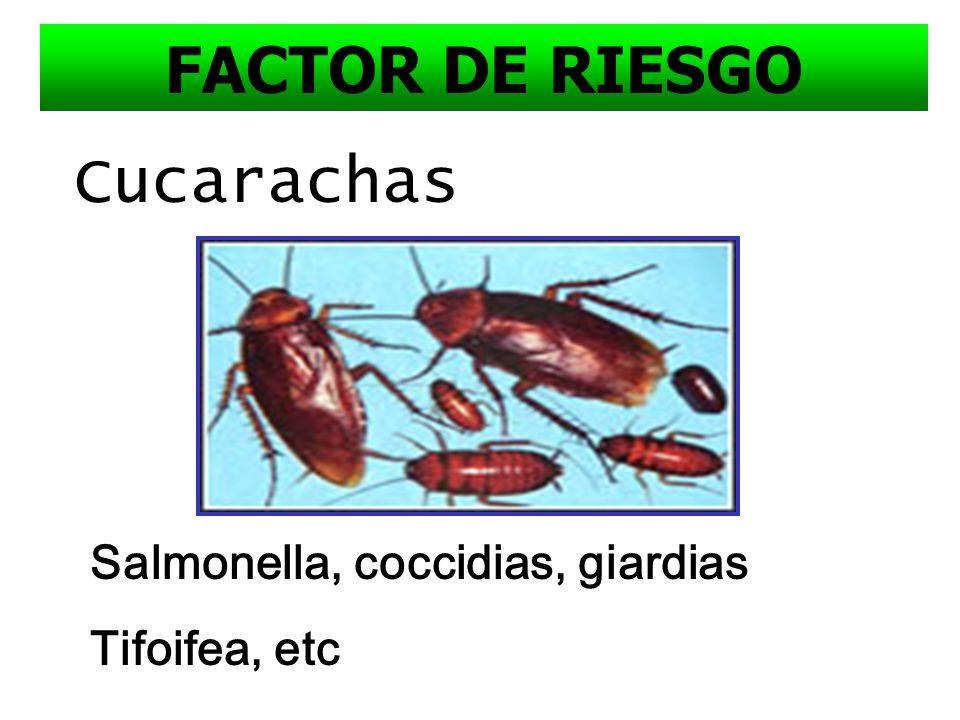 FACTOR DE RIESGO Cucarachas Salmonella, coccidias, giardias
