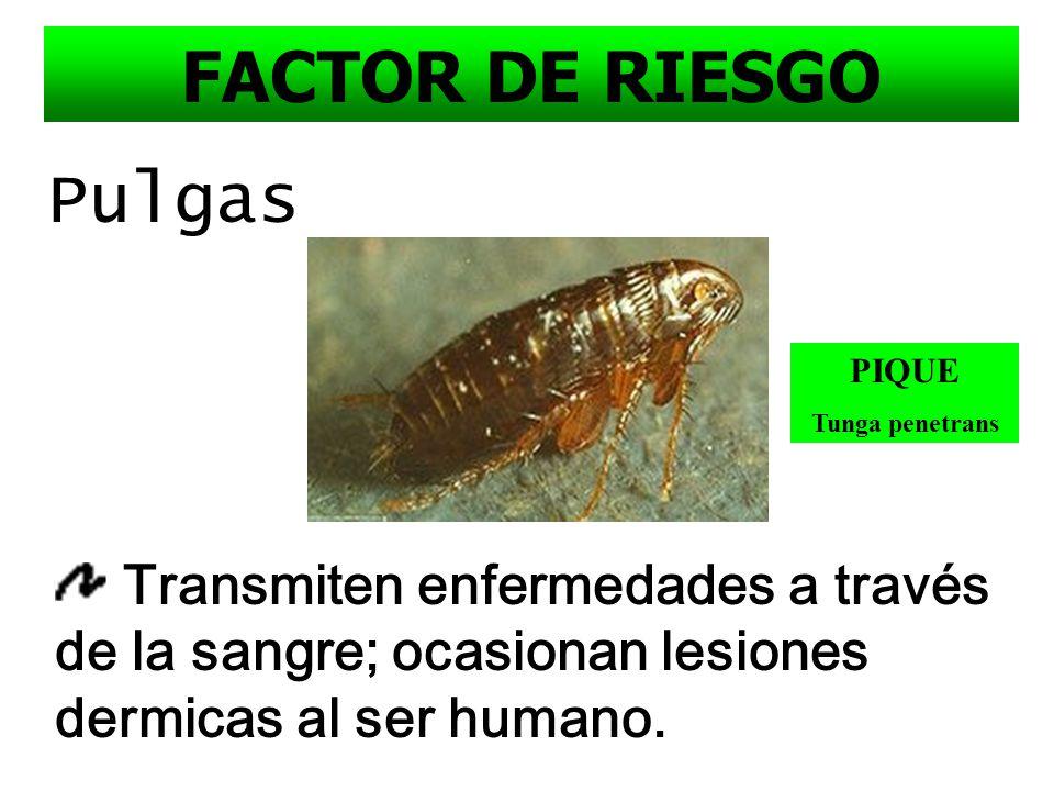 FACTOR DE RIESGO Pulgas