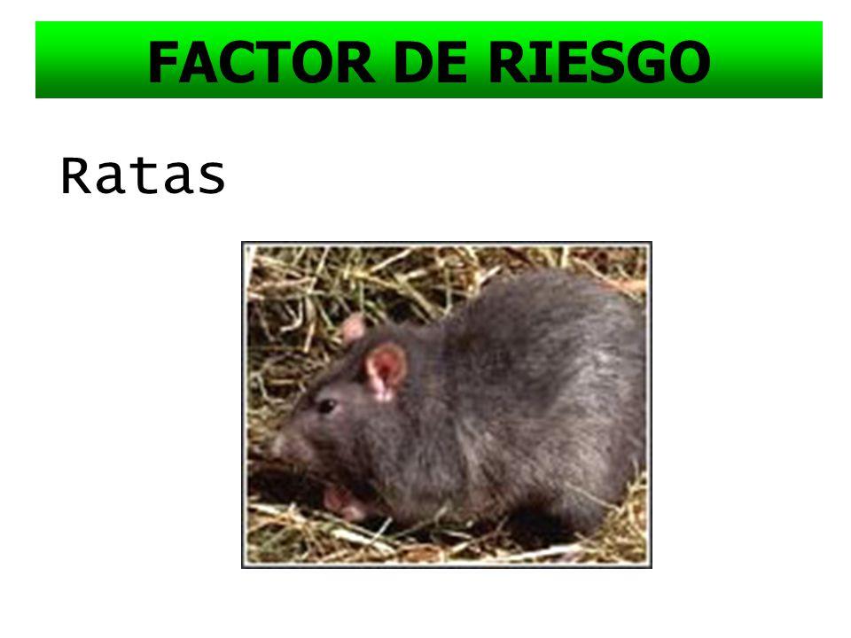 FACTOR DE RIESGO Ratas
