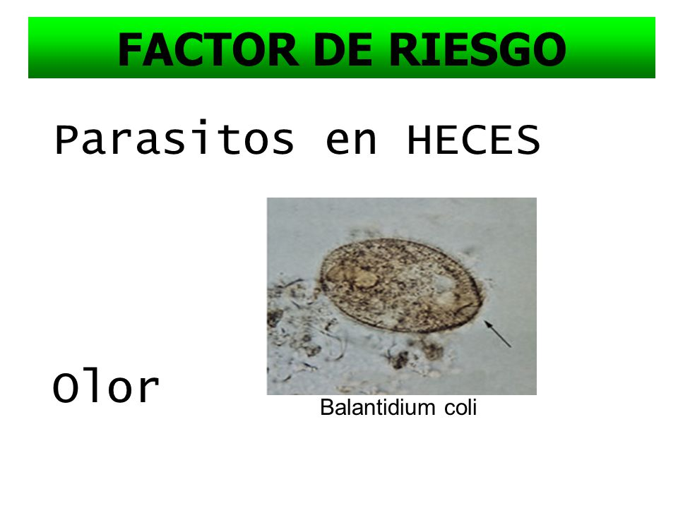 FACTOR DE RIESGO Parasitos en HECES Olor Balantidium coli
