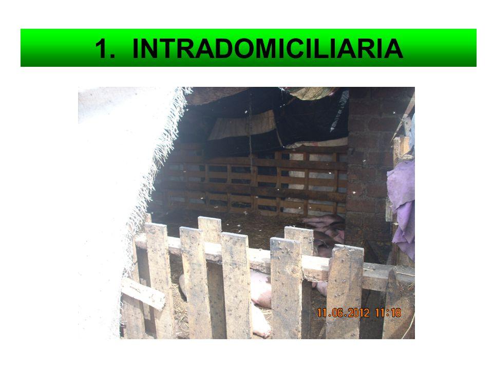 1. INTRADOMICILIARIA
