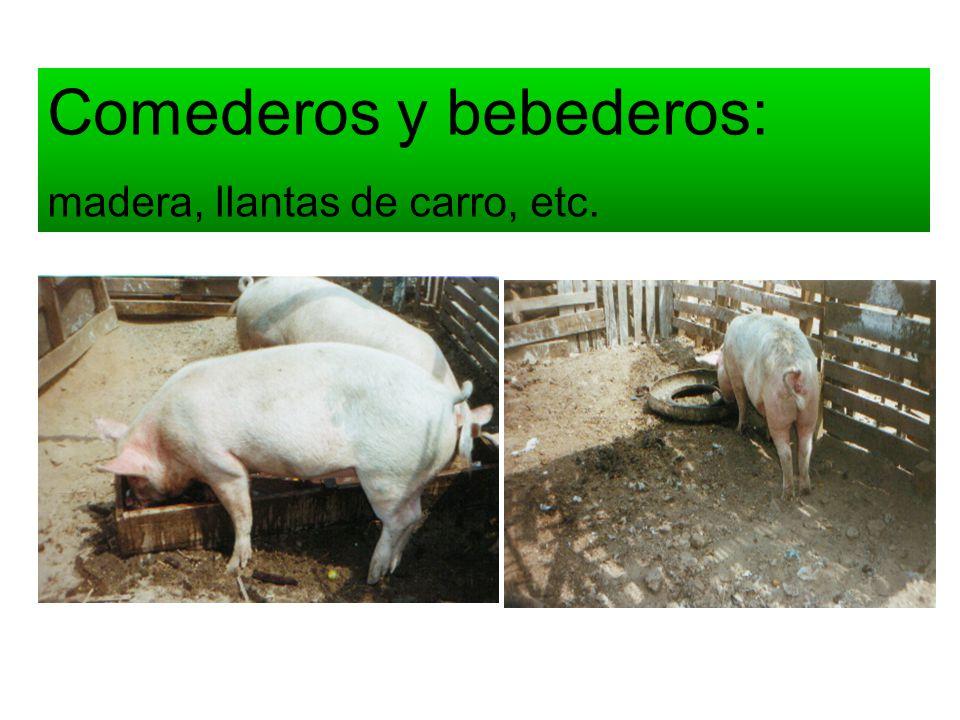 Comederos y bebederos: